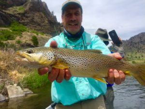 Big Brown Trout on the Missouri
